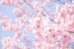 スマイルトレーニング「春爛漫♪笑顔セミナー」